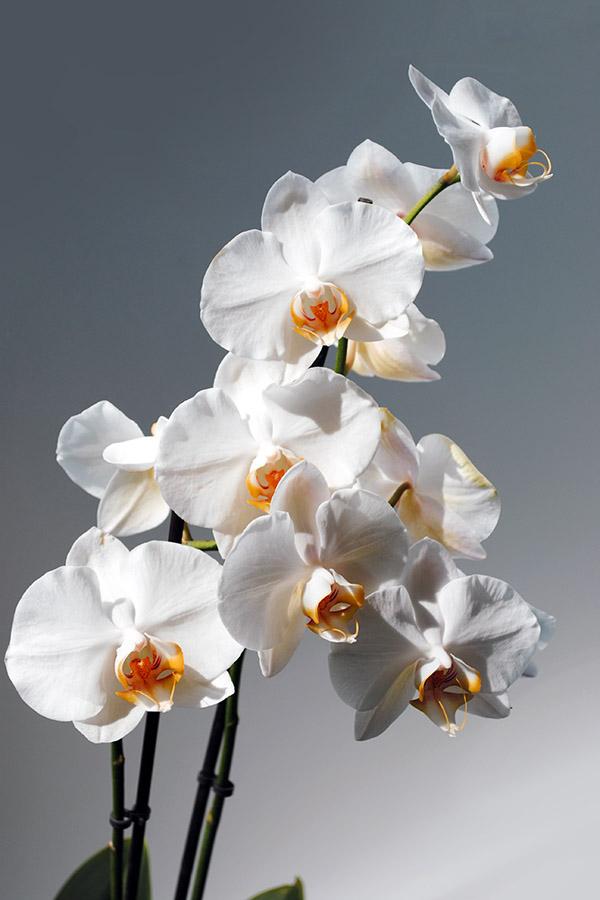 Åmli Fysioterapi & Trening / Orchidee